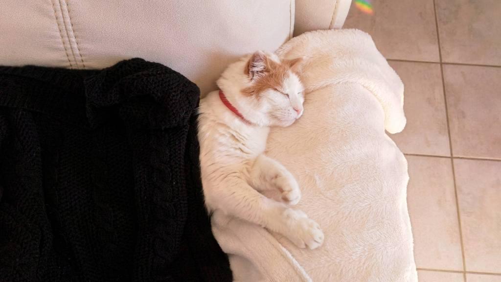 Photo d'un chat dormant dans un canapé, avec une couette.